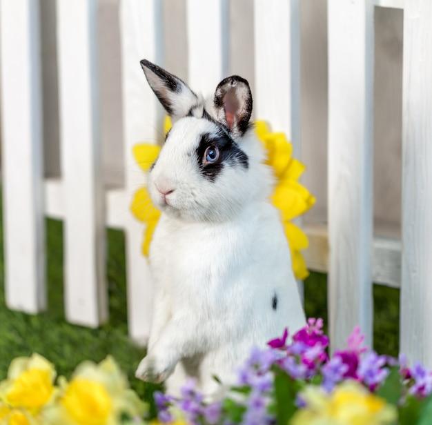 Coniglio in bianco e nero in piedi sulle zampe posteriori Foto Premium