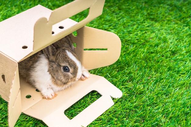 Coniglio in una scatola di carta su erba verde per le vacanze di pasqua Foto Gratuite