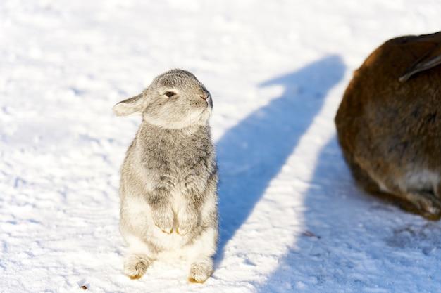 Coniglio lanuginoso bianco che sta aspettando per alimentare neve Foto Premium