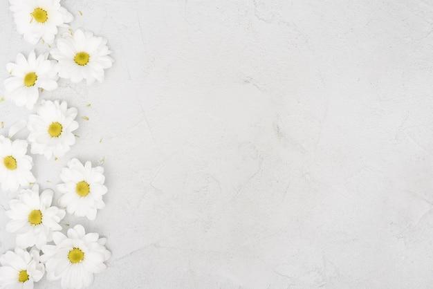 Copia spazio primavera fiori margherita Foto Gratuite