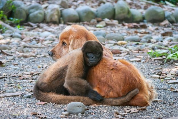 Coppia selvaggia di cane e scimmia Foto Premium