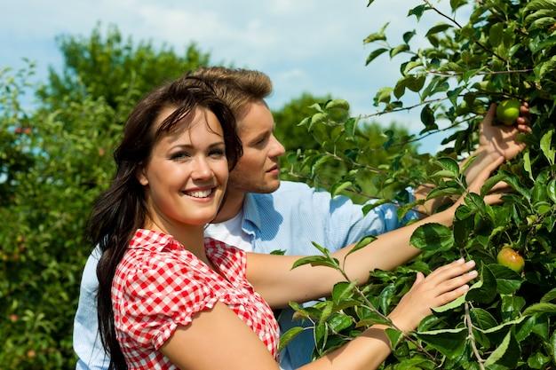 Coppie felici che controllano le mele su un albero Foto Premium