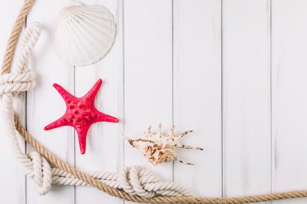 Corde vicino a conchiglie e stelle marine Foto Gratuite