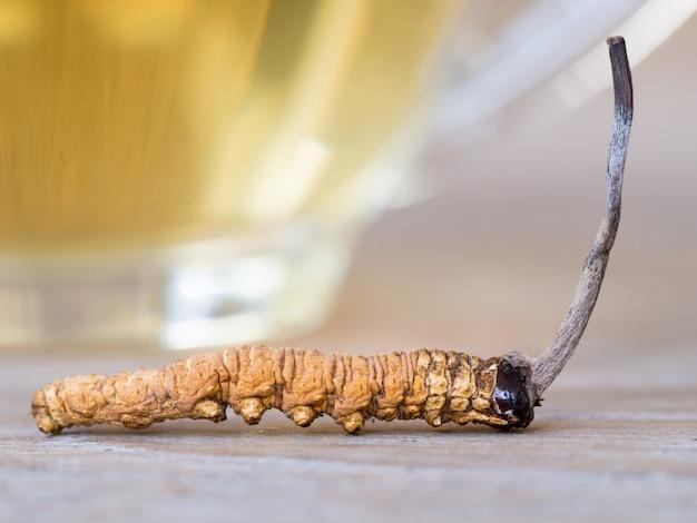 Cordyceps sinensis o funghi questo è un erbe poste di fronte a un bicchiere di acqua cordyceps. Foto Premium