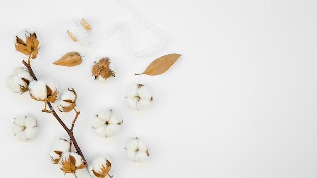 Cornice con fiori di cotone su sfondo bianco Foto Gratuite