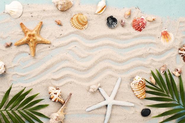 Cornice di conchiglie e stelle marine Foto Gratuite