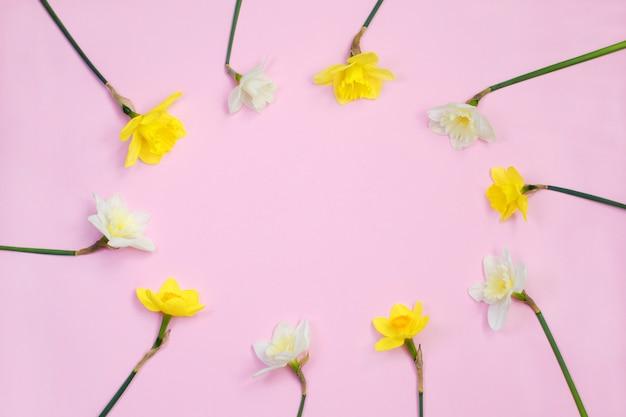 Cornice di fiori di narciso o narciso su sfondo rosa Foto Premium