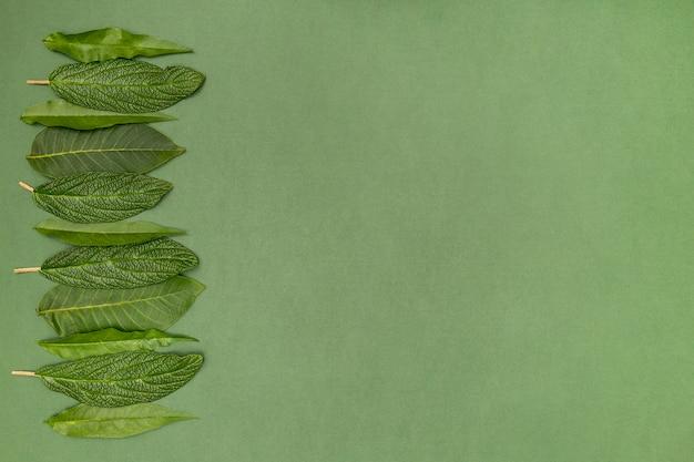 Cornice di foglie di ciliegio su sfondo verde Foto Gratuite