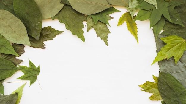 Cornice di foglie naturali Foto Gratuite