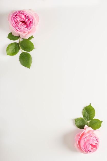 Cornice di peonia rosa e foglie su sfondo bianco Foto Gratuite