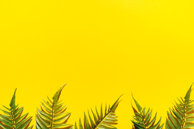 Cornice di rami di palma Foto Gratuite