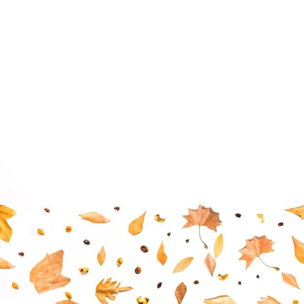Cornice inferiore di foglie e semi autunnali Foto Gratuite