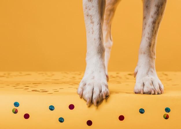 Cosce di cane calpestare coriandoli Foto Gratuite