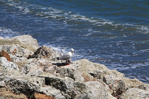 Costa ovest dell'isola del sud, nuova zelanda Foto Premium