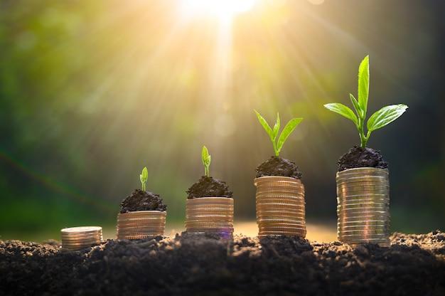 Crescita del denaro risparmio di denaro. l'albero superiore conia per mostrare il concetto del commercio crescente Foto Premium