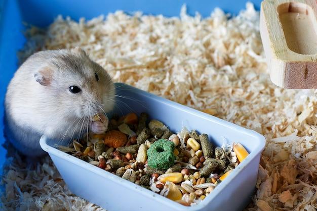 Criceto peloso mangia cibo vicino all'alimentatore in gabbia Foto Premium