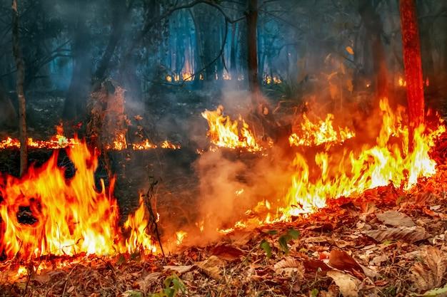 Crisi di incendi boschivi sotto il cambiamento climatico Foto Premium