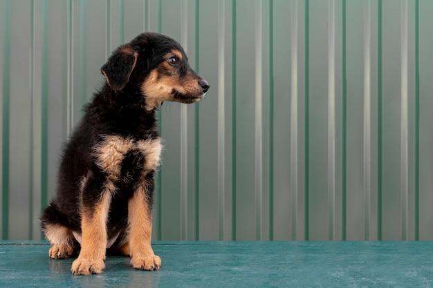 Cucciolo carino vista laterale Foto Gratuite