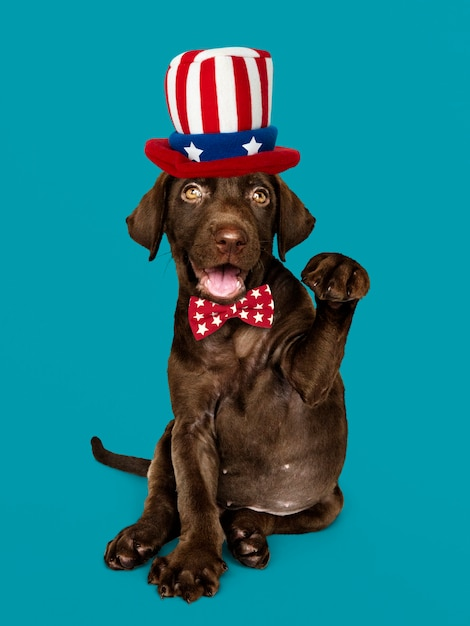 Cucciolo di american labrador Foto Gratuite