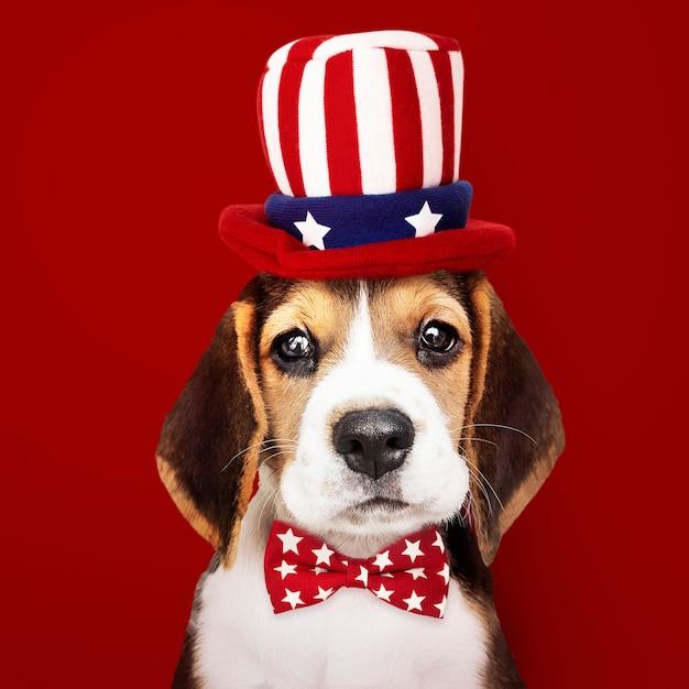 Cucciolo di beagle carino in cappello di zio sam e farfallino Foto Premium