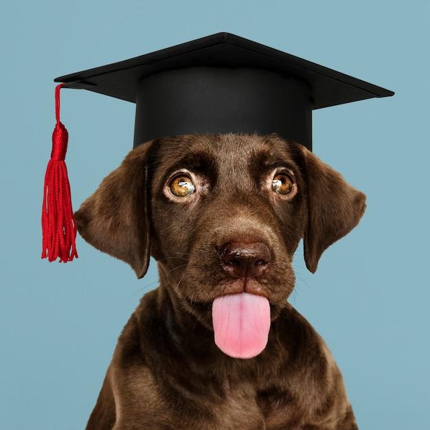 Cucciolo di labrador che si laurea Foto Gratuite