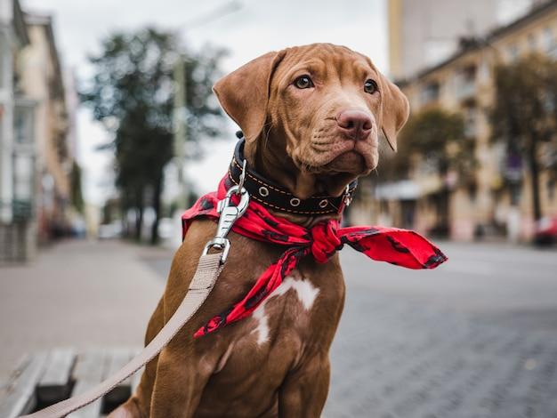 Cucciolo serio seduto su una panchina Foto Premium