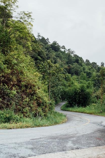 Curva stradale nella foresta Foto Gratuite