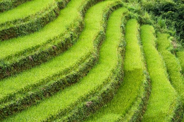 Curva terrazzata sul campo di riso sulla montagna Foto Premium