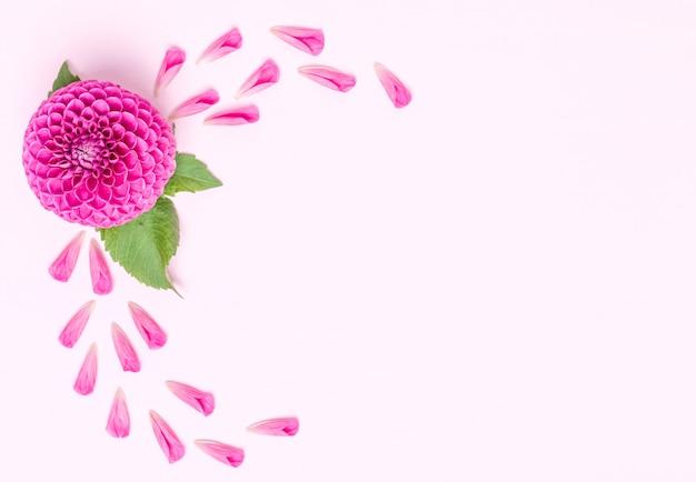 Dahlia ball-barbarry e petali con foglie verdi Foto Premium