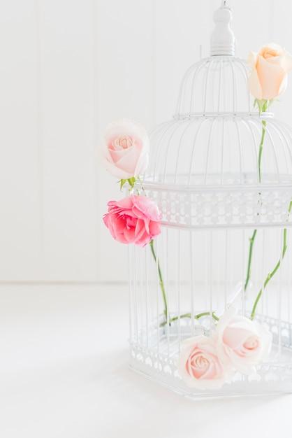 Decorativi rose colorate in una gabbia Foto Gratuite