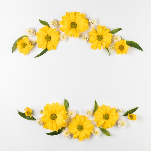 Decorazione del fiore del crisantemo e della camomilla isolata su fondo bianco Foto Gratuite