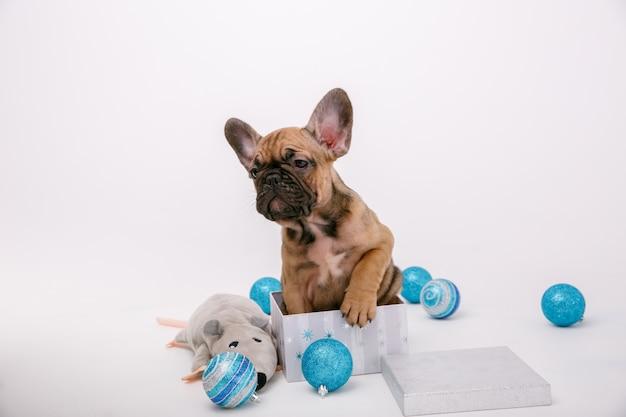 Decorazione di natale del cucciolo del bulldog francese isolata su fondo bianco Foto Premium