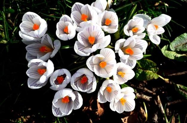 Decorazioni stagione aroma natura fiore di primavera - Decorazioni primavera ...