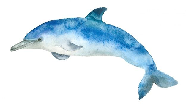 Delfino blu dell'acquerello Foto Premium