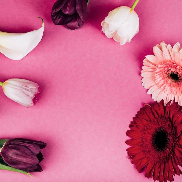 Delicato giglio di arum bianco; tulipani; fiori di gerbera su sfondo rosa Foto Gratuite