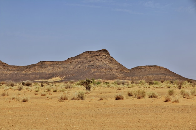 Deserto del sudan Foto Premium