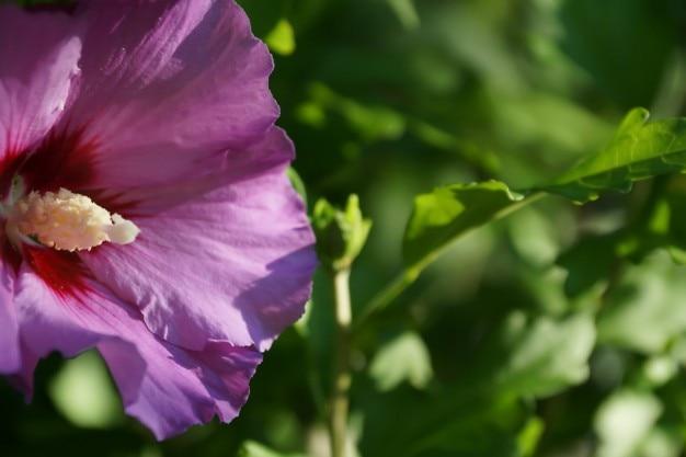 Dettaglio di fiori viola scaricare foto gratis for Pianta fiori viola