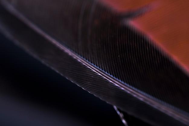 Dettaglio di sfondo nero bordo piuma Foto Gratuite
