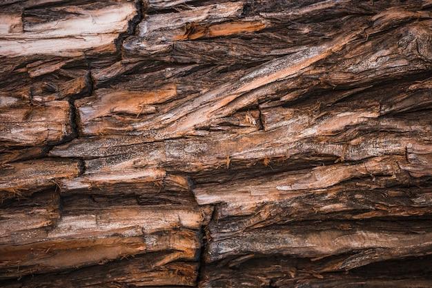 Dettaglio di un tronco marrone Foto Gratuite