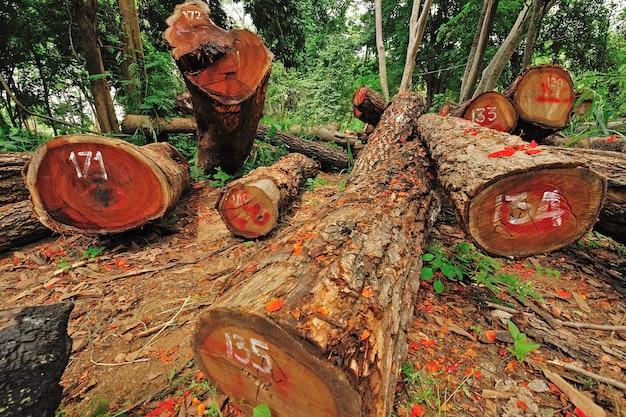 Disboscamento illegale nel cuore delle montagne, tailandia. Foto Premium