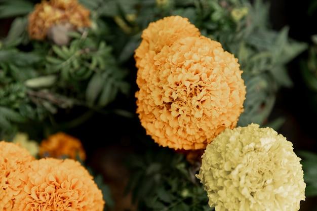 Disposizione con bellissimi fiori gialli Foto Gratuite