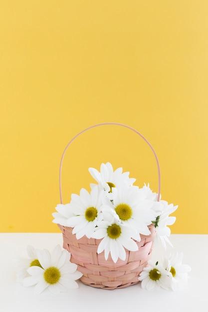 Disposizione con cesto di margherite e parete gialla Foto Gratuite