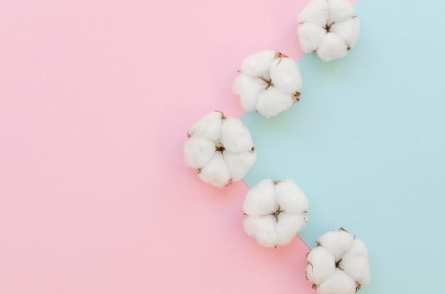 Disposizione con fiori di cotone e sfondo colorato Foto Gratuite
