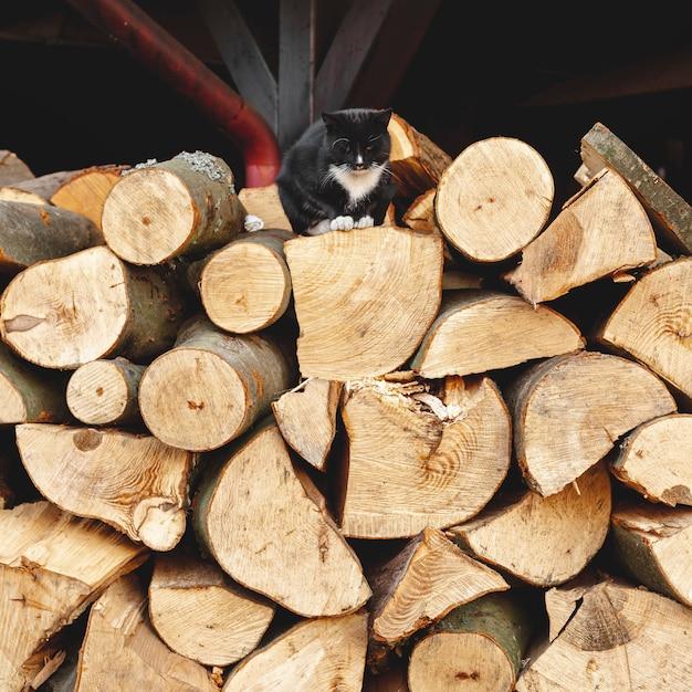 Disposizione con legno tagliato e gatto nero Foto Gratuite