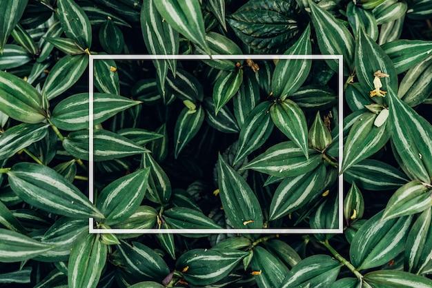 Disposizione creativa fatta delle foglie con la nota della carta di carta. Foto Premium