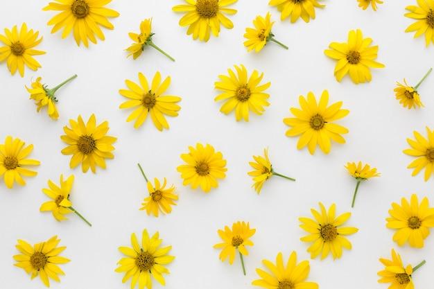 Disposizione delle margherite gialle distese piatte Foto Gratuite