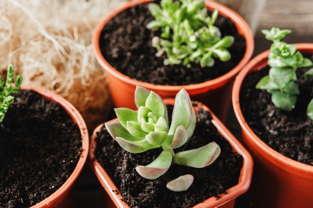 Disposizione delle piante grasse o piante grasse del cactus Foto Premium