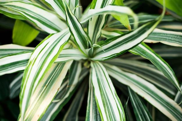 Disposizione di natura creativa fatta di foglie e fiori tropicali Foto Premium