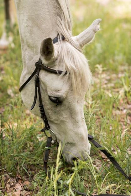Donna che cammina con un cavallo in campagna Foto Gratuite