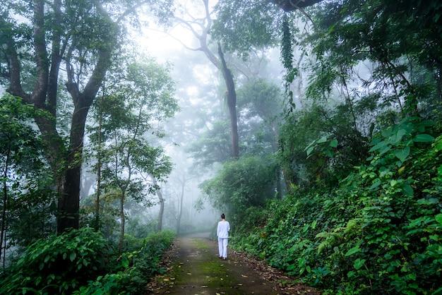Donna che cammina meditazione vipassana in una tranquilla foresta nebbiosa Foto Premium